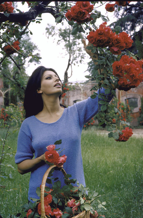 Femme Fatales | Sophia Loren (3/6)